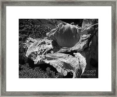 Drift Wood Framed Print by Chad Natti