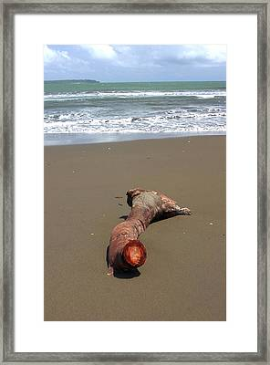 Drift Wood Framed Print by Jez C Self