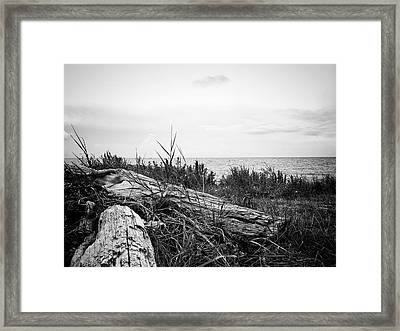 Framed Print featuring the photograph Drift Wood by Karen Stahlros