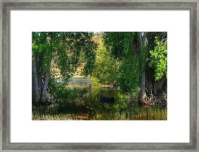 Drifting In Paradise Framed Print