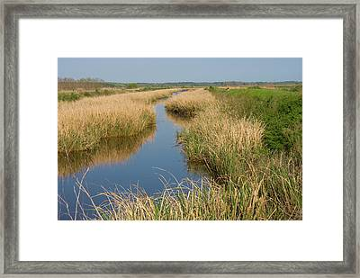 Drifting Framed Print by Margaret Palmer