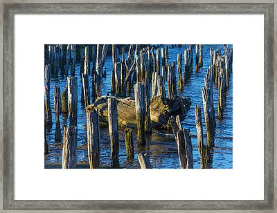 Driftwood Among Pile Posts Framed Print