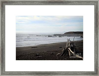 Driftwood And Moonstone Beach Framed Print