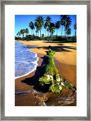 Driftwood And Palms Framed Print