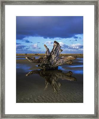 Driftwood And Reflection Framed Print