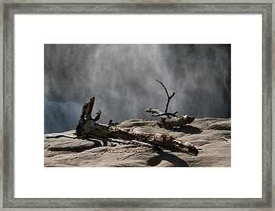 Driftwood Framed Print by Andrei Shliakhau