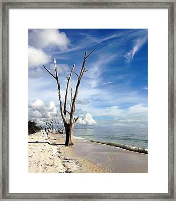 Driftwood At Lovers Key State Park Framed Print by Janet King