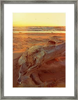 Framed Print featuring the photograph Driftwood At Sunset by Michelle Calkins