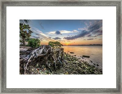 Framed Print featuring the photograph Driftwood At The Edge by Debra and Dave Vanderlaan