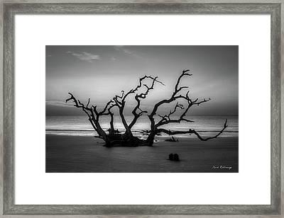 Driftwood Beach Dawn Jekyll Island Georgia Framed Print