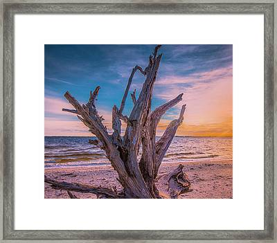 Framed Print featuring the photograph Driftwood Beach by Steven Ainsworth