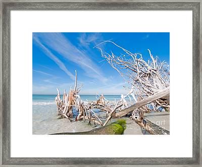 Driftwood C141348 Framed Print