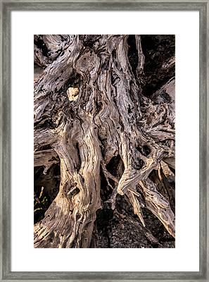 Framed Print featuring the photograph Driftwood Close-up by Steven Ainsworth