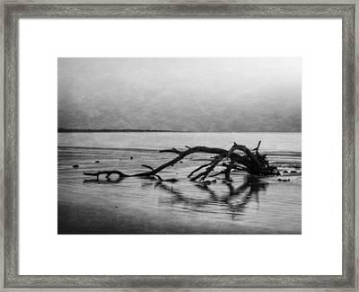 Driftwood Dream In Black And White Framed Print