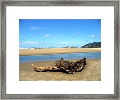 Driftwood Garden Framed Print