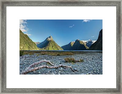 Framed Print featuring the photograph Driftwood In Milford Sound by Gary Eason