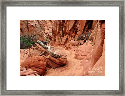 Driftwood In Slot Canyon Framed Print by Thomas R Fletcher