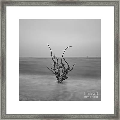 Driftwood Infrared 64 Framed Print by Rolf Bertram