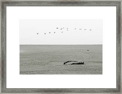 Driftwood Log And Birds - A Gray Day On The Beach Framed Print