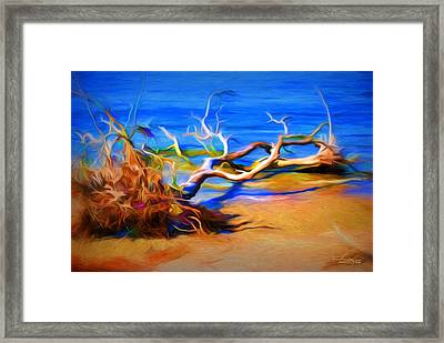 Driftwood Framed Print by Ludwig Keck