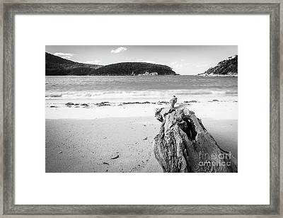 Framed Print featuring the photograph Driftwood On Beach Black And White by Tim Hester