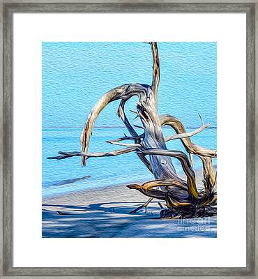 Driftwood On Jekyll Framed Print