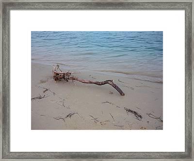 Driftwood On Ocean Beach Framed Print by Adrianne Wood