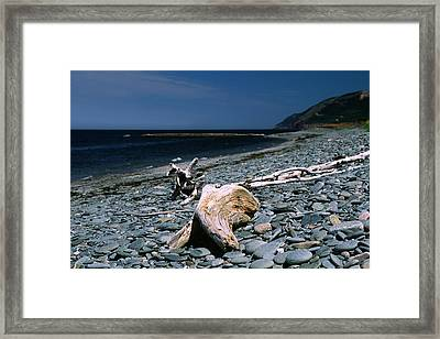 Driftwood On Rocky Beach Framed Print by Sally Weigand
