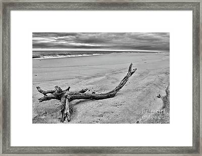Framed Print featuring the photograph Driftwood On The Beach In Black And White by Paul Ward