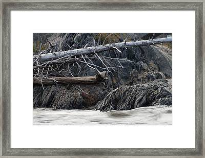 Driftwood On The Rocks Framed Print by Tim Beebe