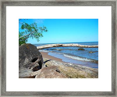 Driftwood Framed Print by Peter Mowry