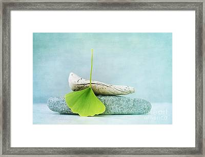 Driftwood Stones And A Gingko Leaf Framed Print