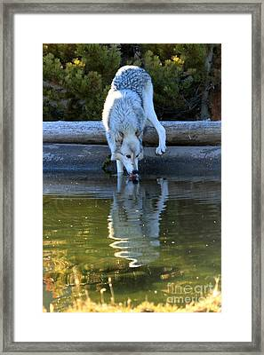 Drinking At The Edge Framed Print