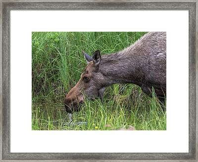 Drinking At The Pond Framed Print