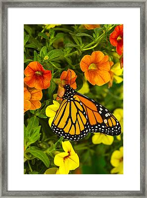 Drinking From A Flower Framed Print by Garry Gay