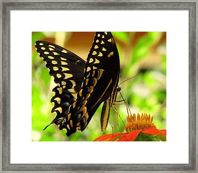 Drinking From A Straw Framed Print by Dottie Dees