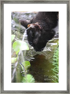 Drinking Kitty Framed Print by Wendy Coulson