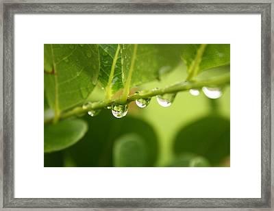 Drip Drop Framed Print by Bradley Nichol