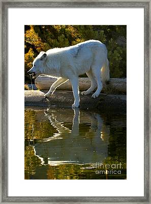 Dripping After A Drink Framed Print