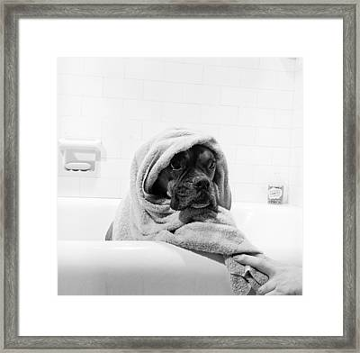 Dripping Doggy Framed Print