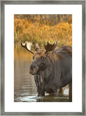 Dripping In The Lunchroom Framed Print