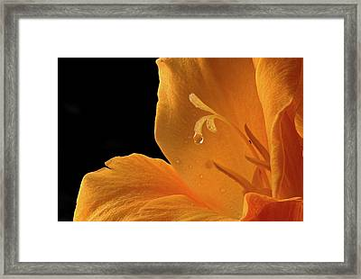 Dripping Framed Print by Jean Noren