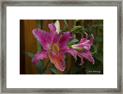Dripping Wet Stargazer Lily Framed Print by Reid Callaway