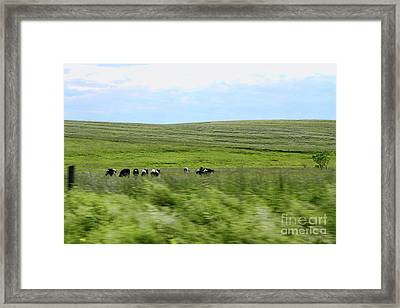 Driveby Shooting No.17 Cows Framed Print by Christine Segalas