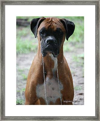 Drool To The Extreme Framed Print by DigiArt Diaries by Vicky B Fuller