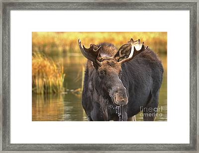 Drooling In The Wetlands Framed Print by Adam Jewell