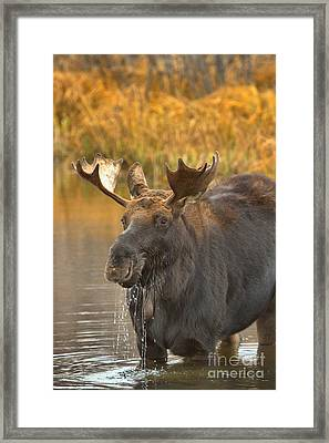 Drooling With Delight Framed Print