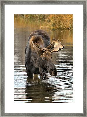 Drools And Dribbles Framed Print by Adam Jewell
