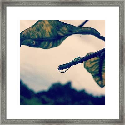 #drop #rainyday #tree #limb #leaves Framed Print
