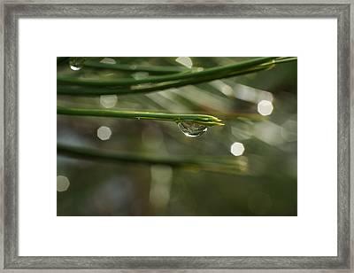 Droplet Framed Print by Jeff Swan